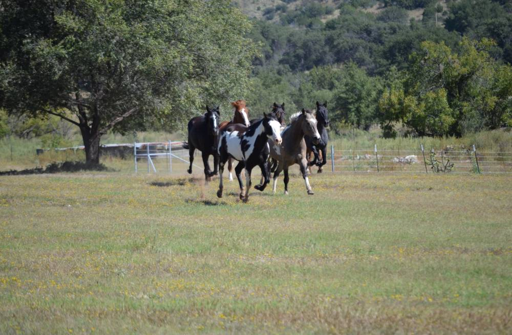 horse creek lesbian personals Find meetups about horseback riding and meet people in your local community who share your interests.